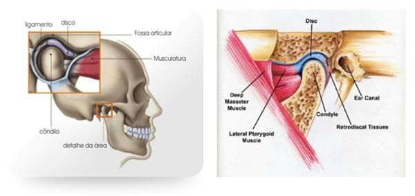 Instruções de saúde oral